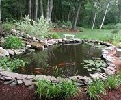 Tetra® Pond / Tetra® Pond: The water garden experts — Get inspirational ideas for your backyard pond or watergarden.