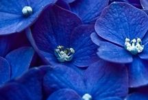 Blåt er godt / Blue is beautiful.