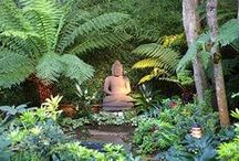 Gardens & Backyard Ideas / Gardening, outdoor furniture, enchanted forests / by cj p