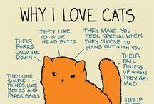Kisuja - Cats