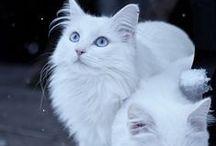 Os gatos. / Animais.