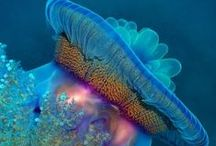Cool ocean creatures