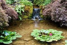 Pools, ponds and watergardens