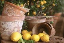 ~Herbs- Citrus-Olives~ / by marsha chenault miller