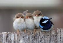 Birds / by Didem Rahvancı