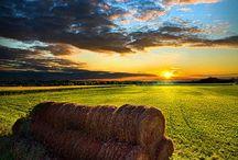 *Country Life / by Sam Ridgeway