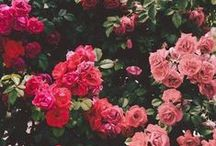 Flowers / by bakinginpyjamas.com