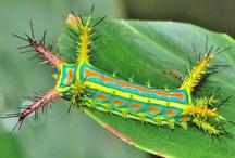 Animals - Bugs!! / Creepy crawly / by Nysha Key