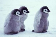 Animals - Penguins! / I believe I can fly...oh, guess nots / by Nysha Key