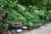Gardening Ideas / Gardening Ideas for beginners and low maintenance gardening.