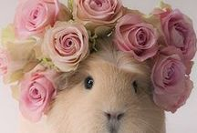 Cute animals / Cuteness