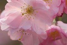Beautiful flowers / Flora ❀