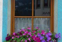 Portas &  janelas / entradas e ventanas por onde vc entra e sai do seu mundo!!!!!!!!!!! / by Gloria Ben