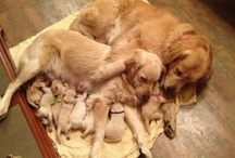 PUPPY / DAWGS... / COULD THEY BE ANY SWEETER?... / by Milli Nieves Garcia