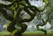 AWESOME TREES... / SOME OF THESE ARE BREATH-TAKING... / by Milli Nieves Garcia