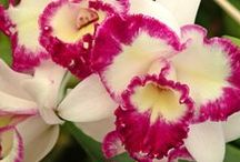 orquideas / by Talita Gomes