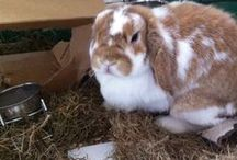 konijnen / konijnen