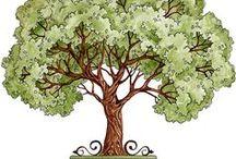 TREES / VARIOUS TREES
