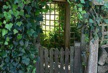 Garden in shadow