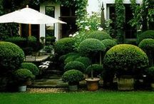 garden inspiration / perfection in planting and entertaining