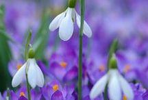 Blooming Spring / Nature reborn