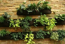 Garden Ideas / Since I expect to be renting for the foreseeable future, I'm looking for gardening ideas that will produce results (veggies, herbs, flowers, whatever I want to grow) and look attractive without altering the property too much. / by Ann S Ⓥ