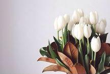 la fleur.
