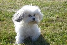 My dog Lila