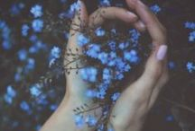 F / flowers