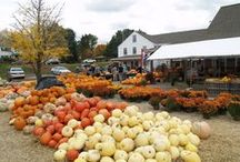 All about Autumn / Apples, Pumpkins, Gourds, Corn, Cider....Autumn means all this and so much more at Lull Farm!