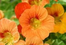 Annuals requiring SUN / You'll find a wide variety of sun loving annual plants at Lull Farm in Hollis & Milford NH