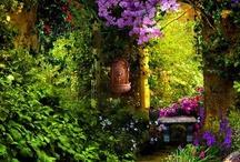 Garden / by t cruz