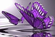 All Things Purple / purple items in life