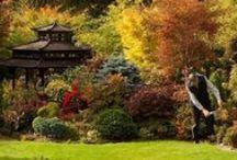 Zahradní inspirace / zahrada