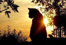 Katten / by Tobyn - De wereld volgens de kat