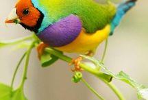 Birds of Australia / All species