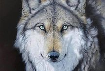 Wolves / All information