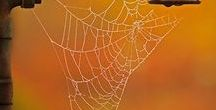 Webs / A spider's web represents the woven trail that we leave behind on the internet our digital footprint. When I first started Social Embers, the spiders web was a logo for the company. This has since changed, but I still enjoy looking at these beautiful miracles of nature.