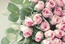 çiçek resimleri / by Dilek Çubuk