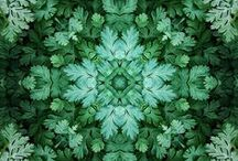 Grr Grr Green / Inspirational Board-all things green...