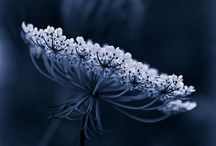 PHOTOS - FLOWERS
