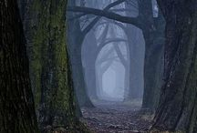 TREES CATHEDRAL