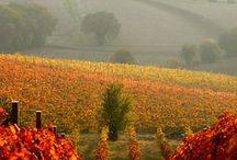Marche / The region of Marche, Italy