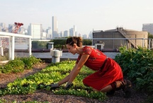 City Harvest / Cool urban farming projects from around the world.