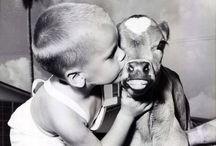 Cows, cows... COWS! ;p / by Shantel Kristalrose