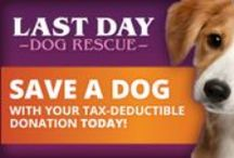 Help  LDDR today! / If you have new ideas and want to help raise money for the rescue, you can put together a fundraiser. Please connect with  ourlastdaydogs@gmail.com to help by donating, hosting a  fundraiser, or ask questions! Any help is appreciated!! / by Last Day Dog Rescue