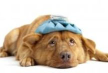 DOG HEALTH CARE & ILLNESS RESOURCES  / It's your job to keep your dog healthy and safe. / by Last Day Dog Rescue