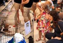 CANTON ADOPTION EVENTS / LDDR has monthly events in cities around Mi, Fill out a application to join the fun of saving lives today!  PetSmart 41856 Ford Rd Canton, MI lastdaydogrescue.org / by Last Day Dog Rescue