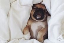 Sleeping Dogs / Let's put aside the debate over whether or not your dog should sleep in bed with you for a moment. Let's just rejoice in these adorable photos of puppies in bed.