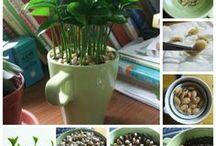 Plantes & Jardinage
